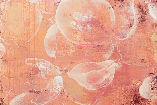 Stowaway Jellyfish